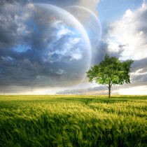 Tree-cosmos