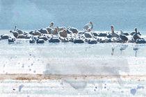 A Gathering of Pelicans von Betty LaRue