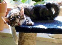 Katzenschläfchen by aidao