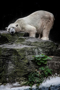 The Contented Bear von Chris Lord