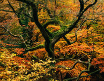Woodland Autumn Colour by Craig Joiner