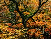 Woodland Autumn Colour von Craig Joiner