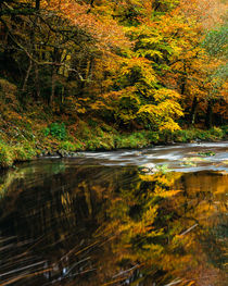 Autumn at the River Teign, Dartmoor von Craig Joiner