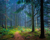 Forest Pathway by Craig Joiner