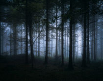 Dark Misty Forest by Craig Joiner