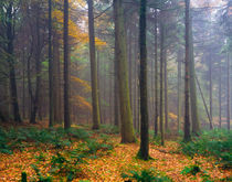 Misty Autumn Forest by Craig Joiner