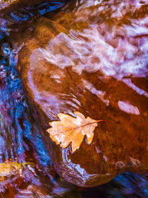Leaf in Horner Water by Craig Joiner