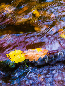 Leaves in Horner Water von Craig Joiner