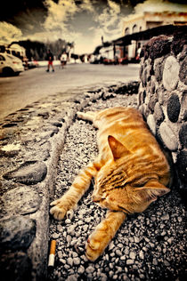 alley cat siesta in grunge by meirion matthias