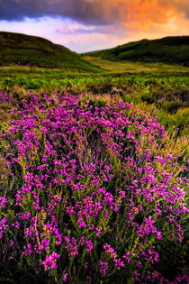 lucky heather by meirion matthias