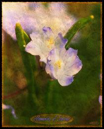 Memories of spring von nameda