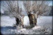 Kopfweiden-Pärchen im Schnee