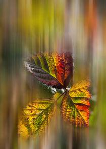 Herbstfarben von Thomas Schulz