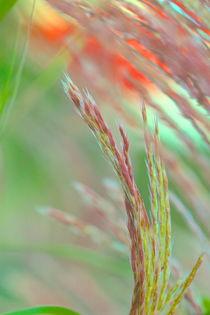 Versteckte Schönheiten von © Ivonne Wentzler
