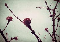 Winter Blossom I von Sybille Sterk