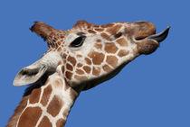 Giraffe by Mary Lane