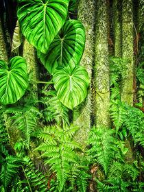 Jungle von Mary Lane