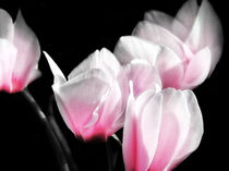 Pink Cyclamen von Mary Lane