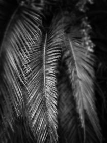 Palm-leaves-bw