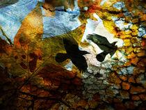 Autumns Crow by Robert Ball
