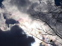 Winter-stark-contrast