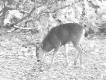 Fotosketcher-browsing-buck