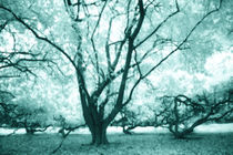Infrared tree von ingojez