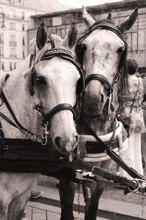 Performing-horses-3b