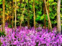 Wild-forest-violets