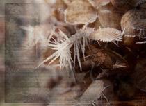 some memories are like ice needles von Franziska Rullert