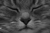 Cats face by pitquist