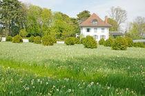 Scenic-meadow-in-nyon-region