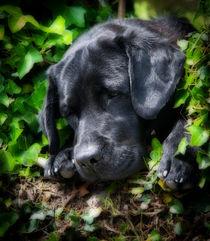 Dog days by Paul Davis