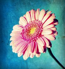 Pink Summer. by rosanna zavanaiu