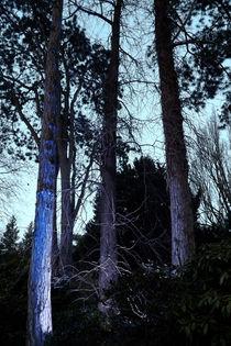 Baumstämme von lorenzo-fp
