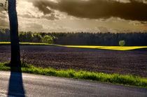 Letzter Sonnenstrahl vor dem Sommergewitter by Paul Artner