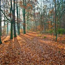 Erster Frost im Laubwald by Paul Artner