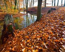 Spätherbst im Auwald von Paul Artner