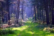 Der Weg ist das Ziel ... by Paul Artner