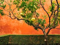 'Stilllive mit Pampelmusenbaum' by ralf werner froelich
