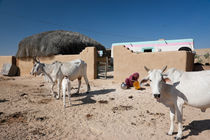 Desert village by Daniel Dostalik