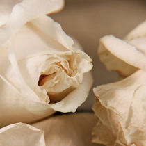 Abstract rose 2 von Maria Livia Chiorean