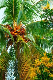 Kokospalme im tropischen Garten by Gina Koch