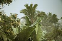 Monsunregen auf Sri Lanka von Gina Koch