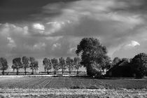 Herbst in Schwarzweiß - Autumn in black and white von ropo13