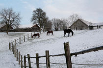 Drei Pferde im Schnee by Margarita Moerth