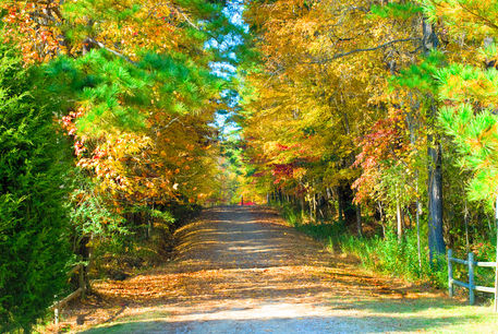 Fall-path-color-landscape-photography