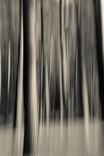 Trees in motion by Lars Hallstrom