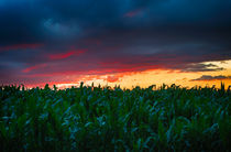 Children of the Corn by Oliver Frohnert