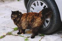 Wild Cat by Arianna Biasini
